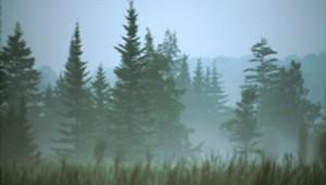 spruce_mist_404_230